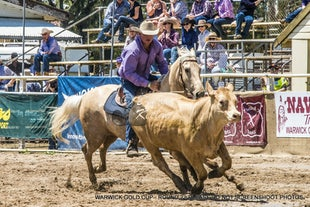 WARWICK GOLD CUP CAMPDRAFT & RODEO - SUNDAY EVENTS -  2016 - This page contains galleries of all events held on the Sunday.