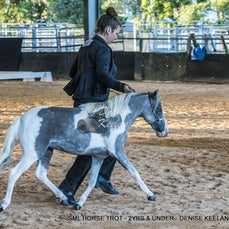 SML HORSE TROT - 2YRS & UNDER