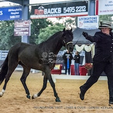 FOUNDATION TROT - 3YRS & OVER