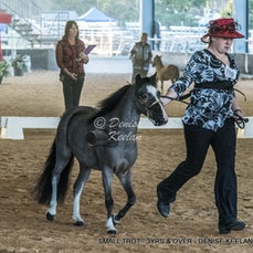 SMALL  TROT - 3YRS & OVER
