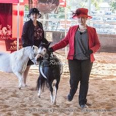 287- BEST PRESENTED HORSE & ADULT HANDLER