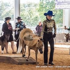 292-MINIATURE HORSE JUNIOR TRAIL