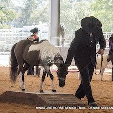 298-MINIATURE HORSE SENIOR TRAIL