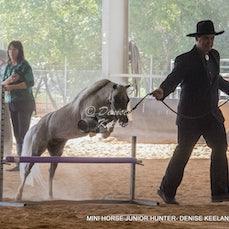 318 - MINI HORSE JUNIOR HUNTER