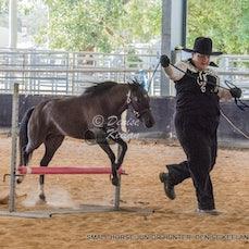 319 - SMALL HORSE JUNIOR HUNTER