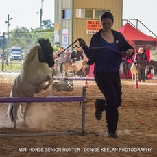 324 - MINIATURE HORSE SENIOR HUNTER