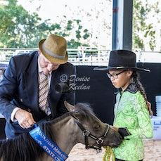 325 - SMALL HORSE SENIOR HUNTER