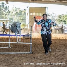 CLASS 336 - SIX BAR - MINI HORSE