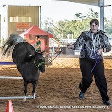 CLASS 337 - SIX BAR - SMALL HORSE.