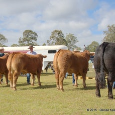 2015 - Blackbutt Show. - Please bear in mind, these are low res images and will appear fuzzy when enlarged to view individually. Reprints and enlargements...