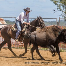 BISON CAMPDRAFTING - TRAINING DAY - SATURDAY