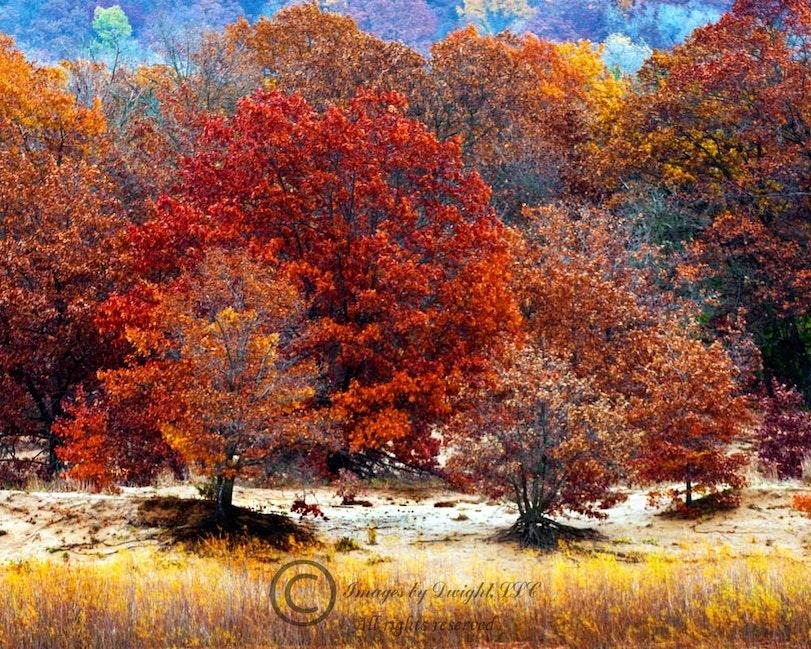 WI Rvr Trees Clr16x20