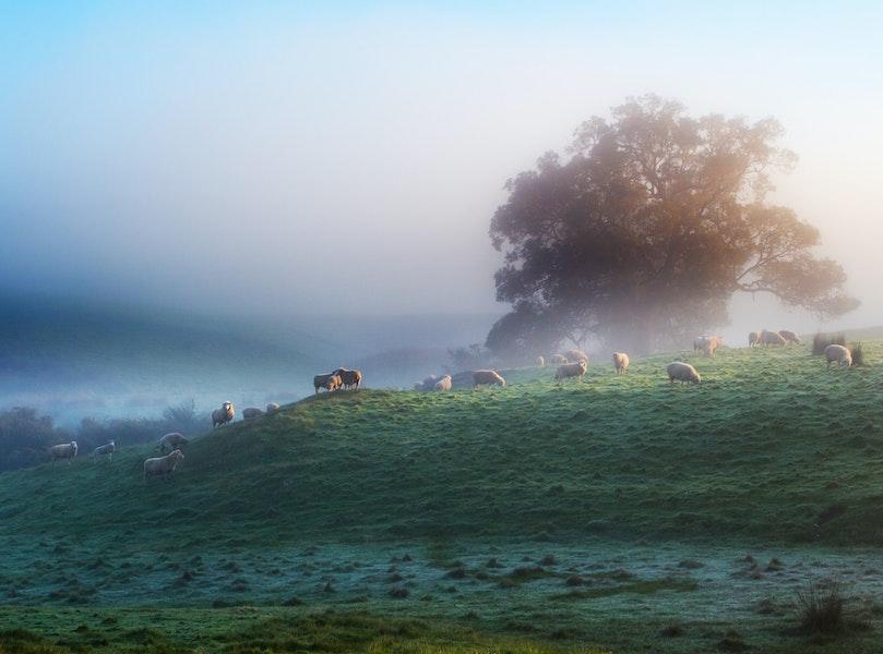 WA Mist