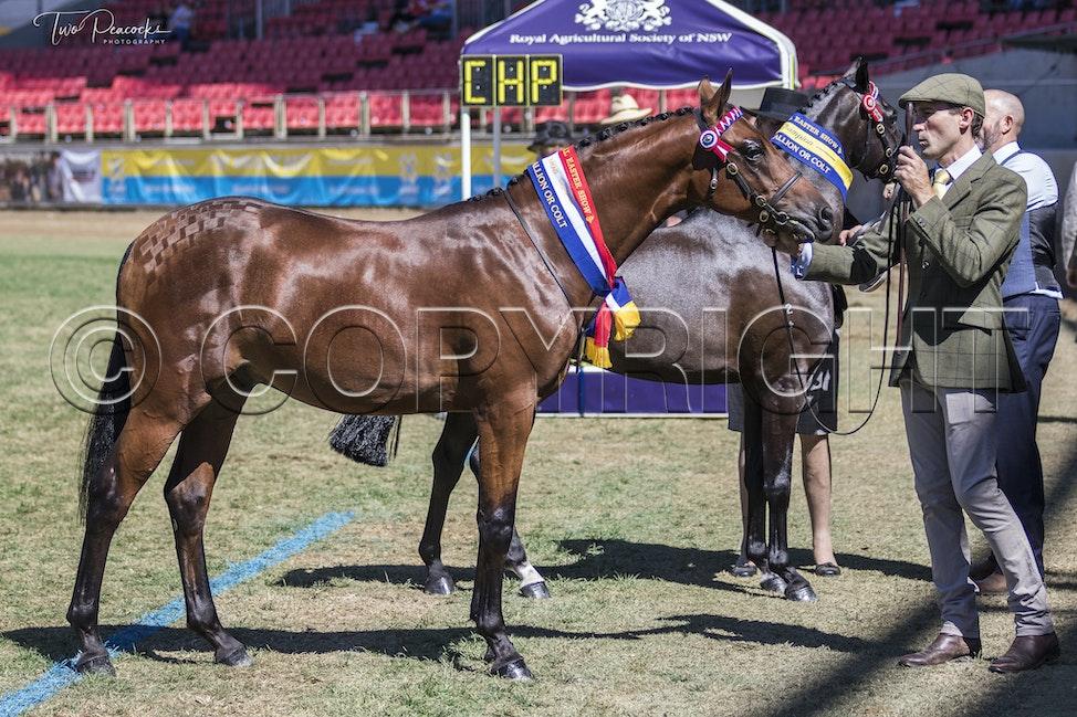Sydney Royal Tues 26 -106