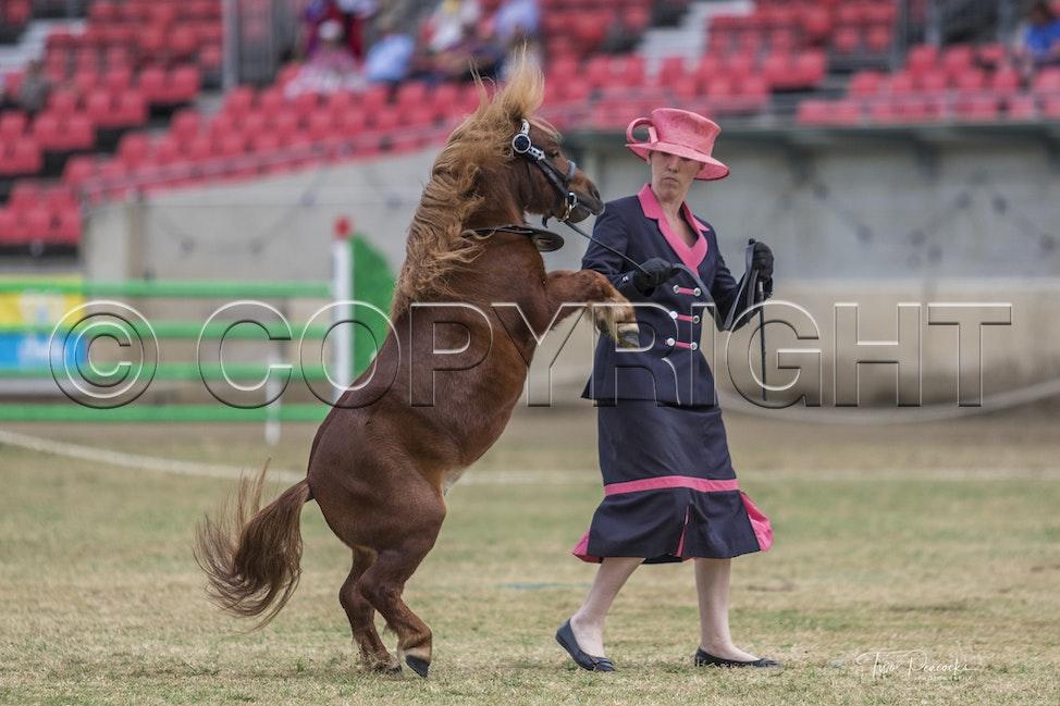 Sydney Royal Sat 31 Mar-118