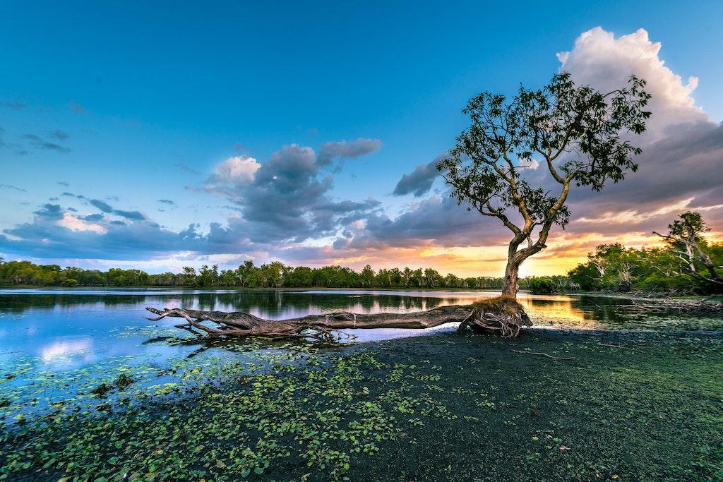 Sandy Billabong Tree Over Lagoon Kakadu 201