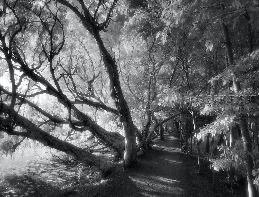 Silver Light - A journey around the edge of Townsville's Ross River in early morning light.