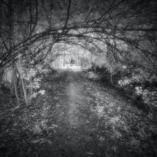 Dark Paths and Silver Light - A collection of Infrared Landscape Images from around Townsville's  Ross River walking paths