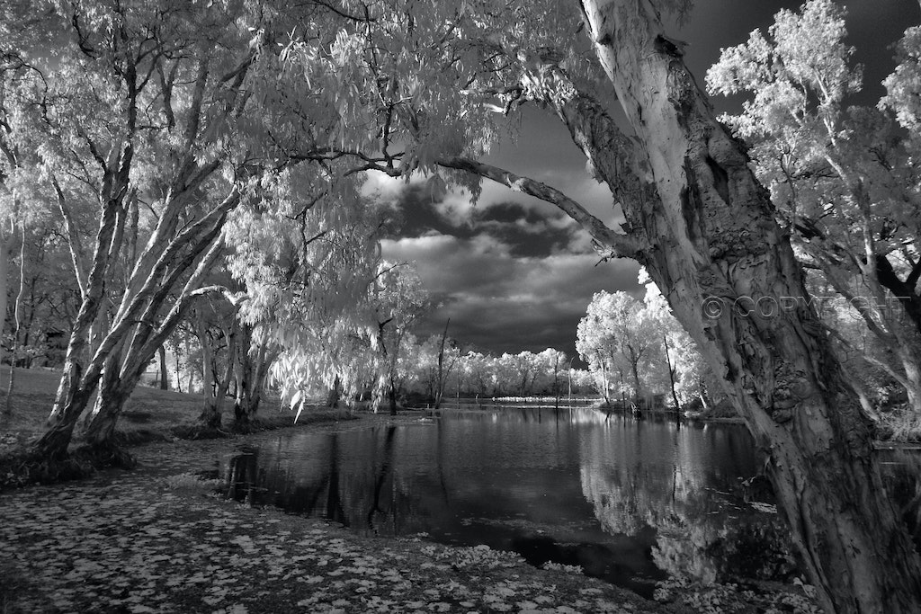 Black Water Dawn - Morning light over Kingfisher Lagoon, Townsville