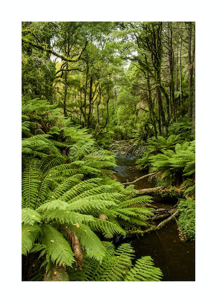 GREAT OTWAY FOREST, VIC