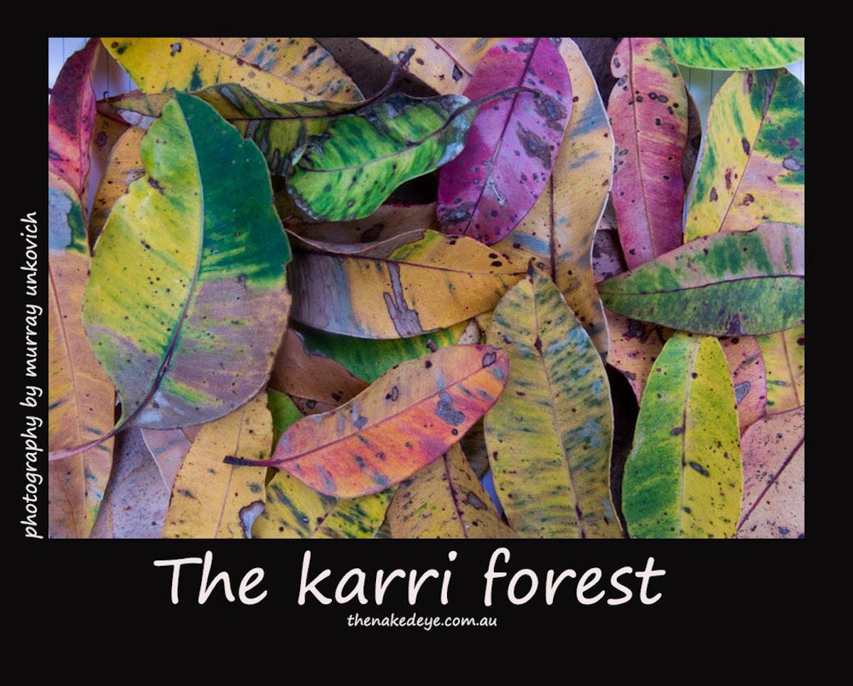 KarriForest