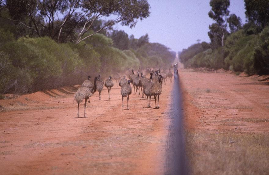 Emu-4