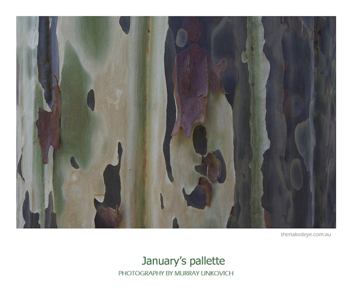 January's pallette