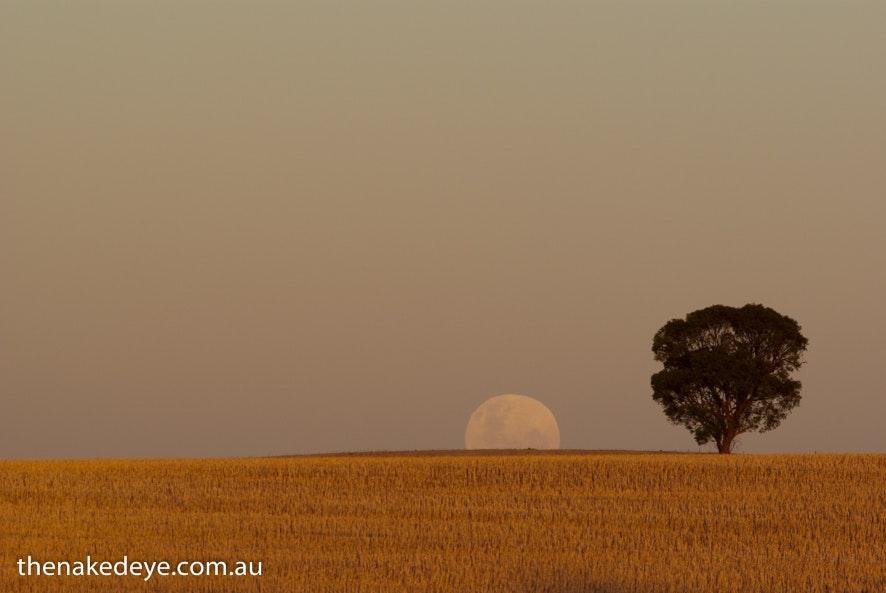 Moonrise near Kapunda - Kapunda