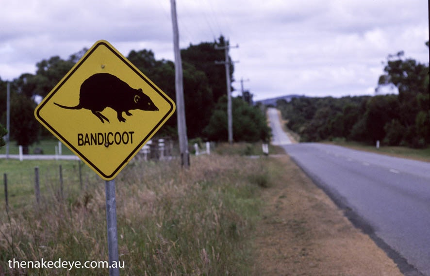sign_bandicoot_2