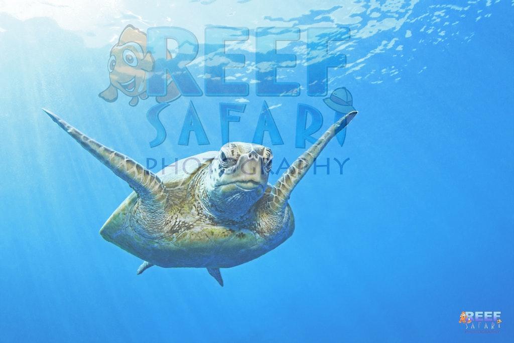 Reef Safari 100 Images (1)