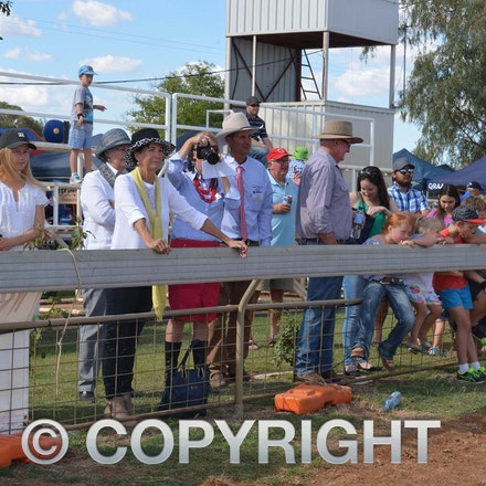 170526_DSC_0873 - Action at the 2017 Isisford Sheep and Wool Show