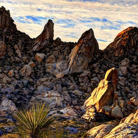 123015 mohave desert nevada (1)