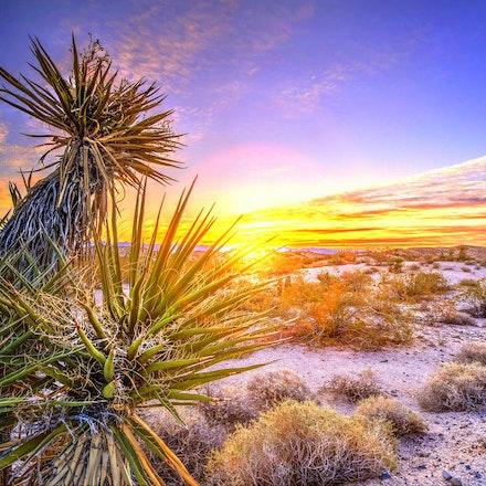 123015 mohave desert nevada (2)
