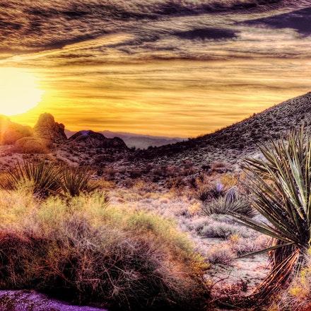 123015 mohave desert nevada (3)