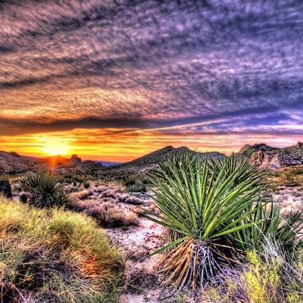 123015 mohave desert nevada (5)