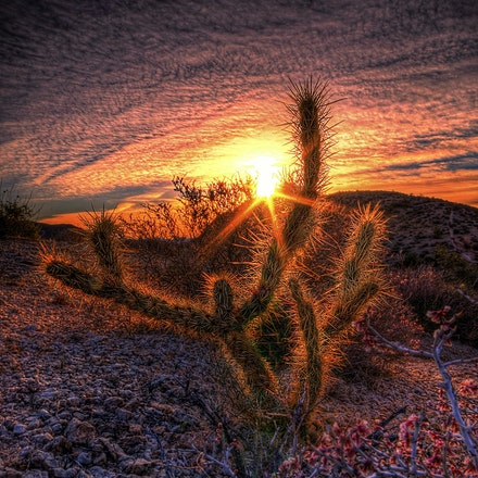 123015 mohave desert nevada (9)