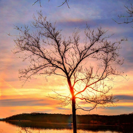 Single 3.20.2015.3 - Single. The reflection of this tree plays with the eyes as it traverses the entire width of Wyndott Lake in Kansas. #sunrise #tree...