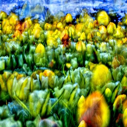 41615flowers (2)