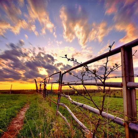 Fence Line - 42115fencenfieldsunset (3)
