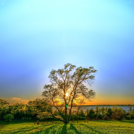 Bigger Than the Rest 5.12.2015.1 - Bigger Than the Rest. A stately giant casts an impressive shadow over the grassy field at Branched Oak Lake. Malcolm,...