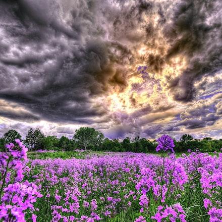 Fields, Pastures & Meadows
