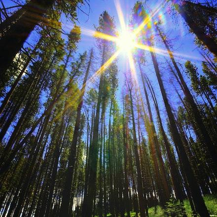 Fallen 7.10.2015.13 - Fallen. The summer sun shines down onto the fallen giants resting on the forest floor. Vail, Colorado. #trees #sunstar #sun #vail...