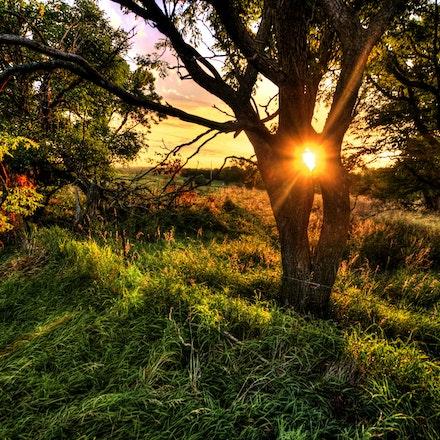 Through the Hole 8.1.2015.10 - Through the Hole. A setting sun plays peek-a-boo through the branches of a tree in Saline county, Nebraska. #nebraska #salinecounty...