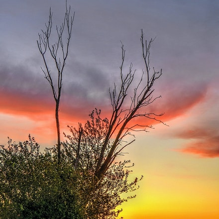 Wind Row 10.13.2014.1 - Wind Row. A cluster of trees sits at the edge of a plowed farm field in Seward County Nebraska. #nebraska #sunset #farmsunset #trees...