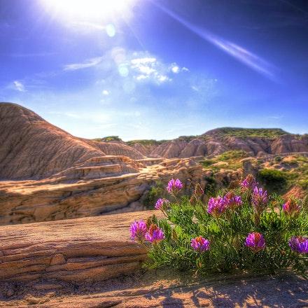 WHERE DESERT FLOWERS BLOOM  Toadstool Park  Souix County
