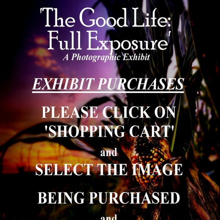 Bryan Lifepointe Exhibit - This gallery contains only the images on display and for sale at my current exhibit in the County city Building