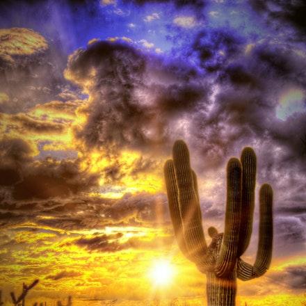 Cactus Sun     2.23.2018.4 - Cactus Sun. The setting Arizona sun lights up the desert landscape in Scottsdale, Arizona. #sunset #sunstar #arizona #scottsdale...