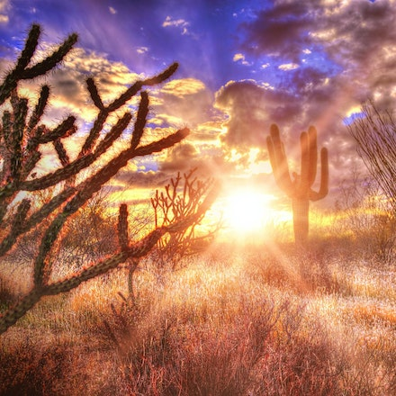 Desert Brush   2.23.2018.5 - Desert Brush. The Sonoran desert landscape is all aglow thanks to a vivid setting sun in Scottsdale, Arizona. #sunstar #arizona...