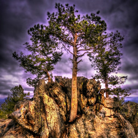 Perspective   4.21.2018.9 - Perspective. This tree proves life can thrive just about anywhere as it juts out of the side of this rocky outcropping in Estes...