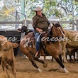 The Beaudesert Cutting & Western Performance Club - All classes from 26/9/15